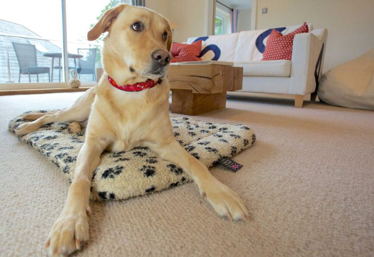 Take your dog to devon this summer things to do in devon for Pet friendly luxury hotels